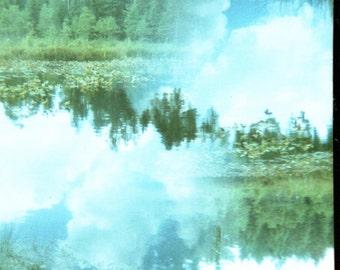 Trees and Sky Original Cross Processed Film Photo
