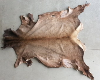 Rocky Mountain Elk Hide-  Soft tanned- Lot No. 0417-M