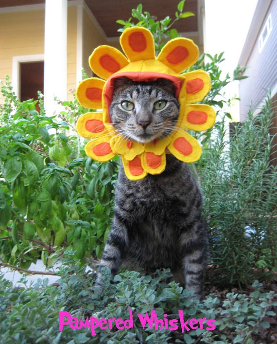 Late Bloomer flower costume for cats and dogs