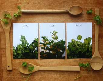 fresh herbs, Kitchen art prints, herb photography, parsley, mint, cilantro, set of 3, housewarming gift, foodie, chef baker, restaurant art