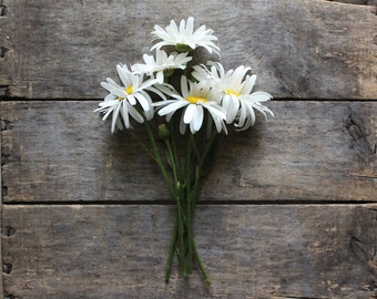 Shasta Daisy, heirloom organic seeds, flower seeds, from our farm, wildflower garden, organic gardening, gardener, home + garden