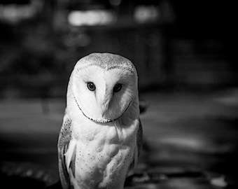 Owl Photography, Black and White Nature Photograph, Bird Picture, Feather, Home Decor, Wall Art, Gift for Him