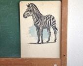 Vintage School Flashcard- Zebra