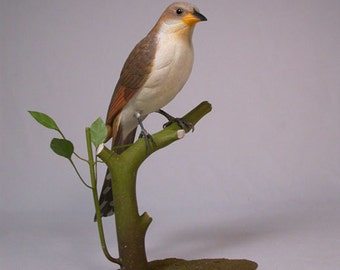 "10"" Yellow-billed Cuckoo Wood Bird Carving"