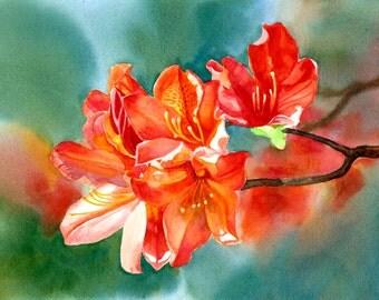 Orange Azalea watercolor art painting original floral watercolor orange flowers 10.5 x 14.5