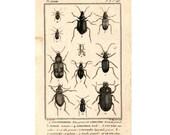 1775 BEETLES INSECTS ENGRAVING original antique buffon bug print - plate 267
