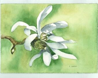 White Magnolia Flower - Original Watercolor Artwork