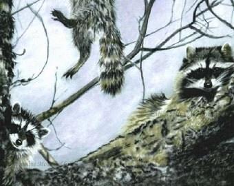 Raccoon Painting - raccoon art, raccoon, raccoon lovers, wildlife art,