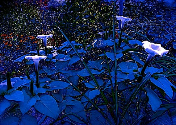 Items Similar To Blue Moonlight Twilight Flower Garden