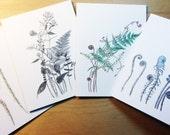 Botanical Art Cards, Series 10 - Ferns