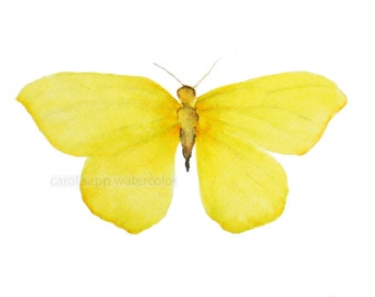 """small yellow butterfly 5"""" x 7""""archival print of original watercolor"""