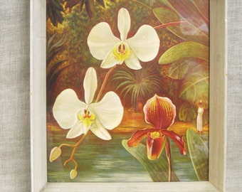 Orchids , Orchid Print , Mid-Century , Wall Decor , Framed Prints , Flowers , Botanical , White Flowers , White Orchid , Wall Art , Prints