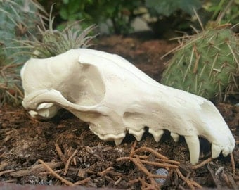 Beautiful Hand Made Red Fox Skull Replica Cactus Succulentor Small Flower Pot