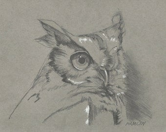 Screech Owl Study - Open edition print of an original drawing (fits 11x14 frame)