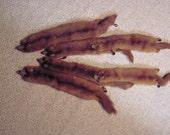 Vintage, Mink Stole, by Alexe Kessler St. Louis Mo. Furriers,  Mink Stole, 6-MINK BODIES , Collar Wrap ? Rare item