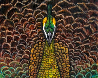 High Quality Art Print of Female Java Green Peacock