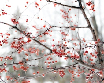 Cherry Blossom Photography, Cherry Blossom Art, Cherry Blossom Print, Nature Photography, Flower Photography, Cherry Blossom Photo, Trees