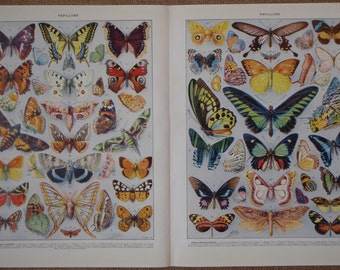 TWO Vintage Prints of PAPILLONS (Butterflies) by Adolphe Millot from the Nouveau Larousse Illustre 1932