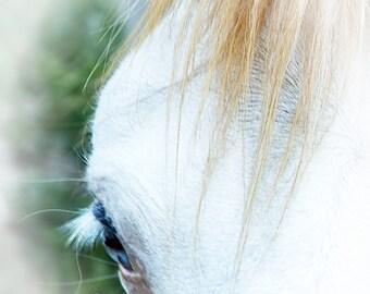 Horse Art Spanish Barb horse soft blue eye bald face white chestnut flaxen green equine fine art southwestern decor FastWinn Photography AZ