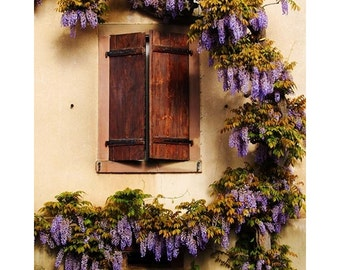 Fine Art Color Travel Photography of Wisteria Encircling Shutters in Alsace - Riquewihr France
