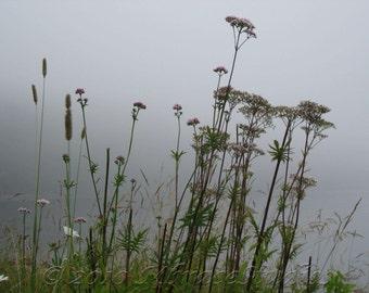 Misty Coastal Flower Photo - foggy gray floral ocean photography