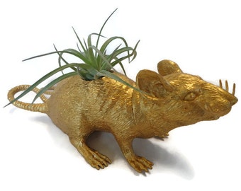 Air plant in re-purposed toy rat ornament.