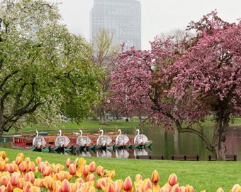 Boston Public Garden, Bedroom Decor, Boston Swan Boats, Fine Art Prints, Tulips Pictures, Spring Photos, Office Decor, Large Art, Guest Room