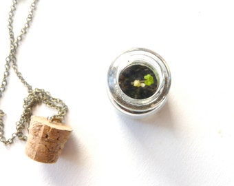 Clover terrarium necklace pendant green look ( leaf, nature, living, ecosystem, forest, woodland ) 05