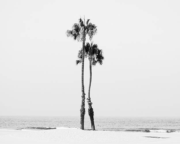 Black And White Beach Art Palm Tree Print Minimalist Gray