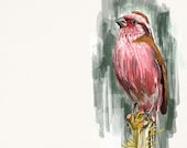 Chinese Rosefinch Print, Wildlife Illustration, Cute Bird Drawing, Postcard Art  RF1