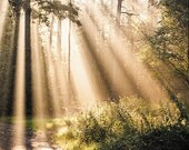 Enchanted Forest with Sun shadow light Postcards - Fine Art Photograph