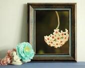 hoya carnosa print  home decor print decor wall art   instant download