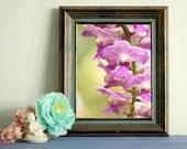 orchid print  home decor print decor wall art   instant download