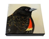 Red Wing Blackbird painting, original black bird art, 4x4 square canvas