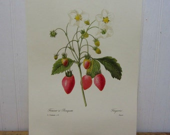 Vintage Strawberry Fruit Book Page Ephemera Kitchen Wall Decor