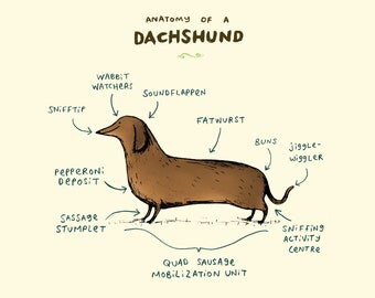 Anatomy Of A Dachshund A4 Signed Print