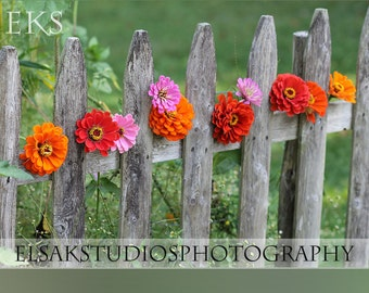 Set of 5 blank cards - 10 Zinnias