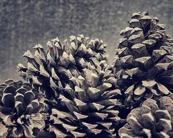 Fall Decor Winter Decor, Pine Cones Photograph, Rustic Cabin Art