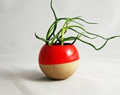 Sphere Succulent Air Plant Planter // Red Orange + Wood