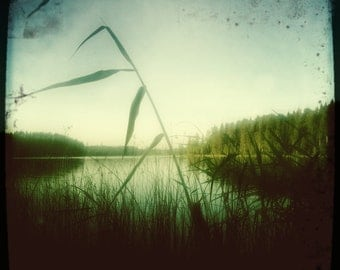 Blade Of Grass Lake Summer Sweden Grasses Water Art Photograph Print