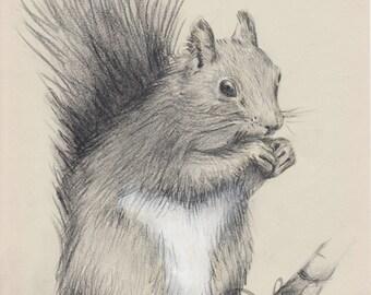 Middia Lenormand Original Drawing Sketch Happy Squirrel