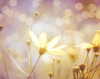 Daisy Photograph Floral,golden daisies,flowers in sunset,yellow daisies,summery print,baby nursery artwork,purple,lilac,creamy,saffron,bokeh
