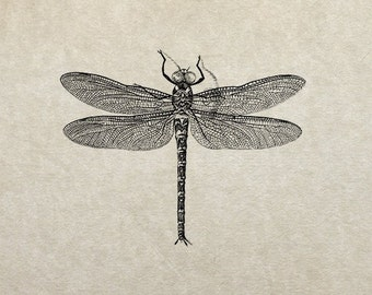 80% OFF - Dragonfly Sketch (Image 8a) - PNG / JPG Digital Image Download - Transfer / Iron on / Clip-art / Commercial Use