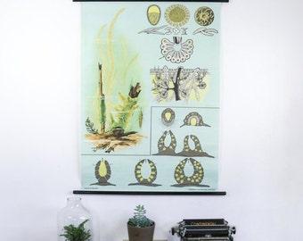 Vintage Pull Down Chart Freshwater Algae, Paper on linen, german school print