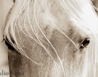 Sepia Horse Canvas