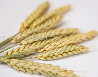Wheat Stems for crafting