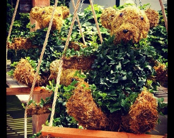 Hanging Topiary Teddy Bear Planter