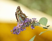 Butterfly Photography Print New Mexico Lavender Flower Branch Floral Wildlife Nature Summer Landscape Photography Print.