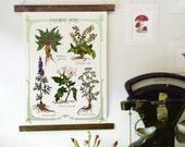Poisoners Herbs Canvas Wall Hanging - Botanical Illustration