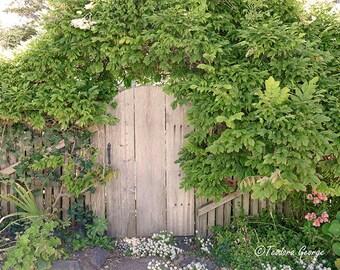 Leafy Door Photography, Still Life Photo, Vintage Door